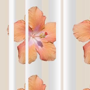 Hibiscus_white