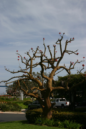 Tree_another
