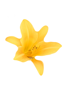 Yellow_flower_sticker_copy