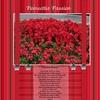 Poinsettia_passio2